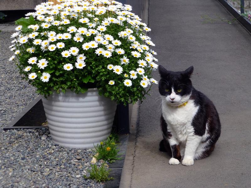 スロープから見ていた黒白猫2