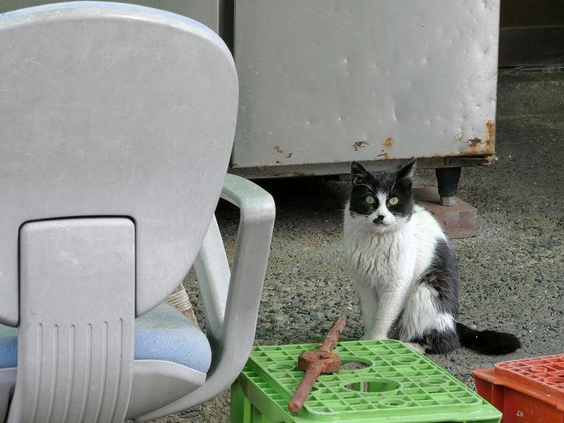 椅子と黒白猫1