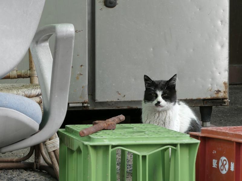 椅子と黒白猫2