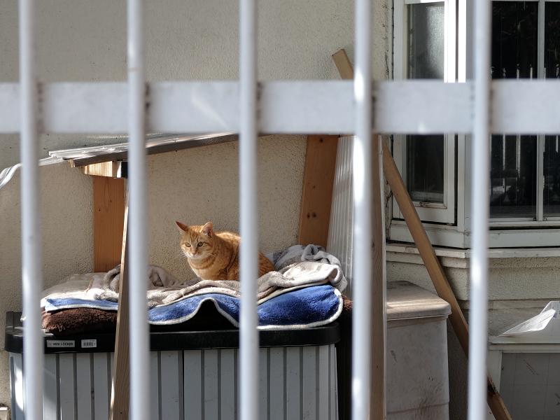民家敷地内の猫2匹3