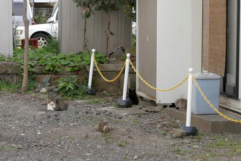住宅街の空き地の猫たち1