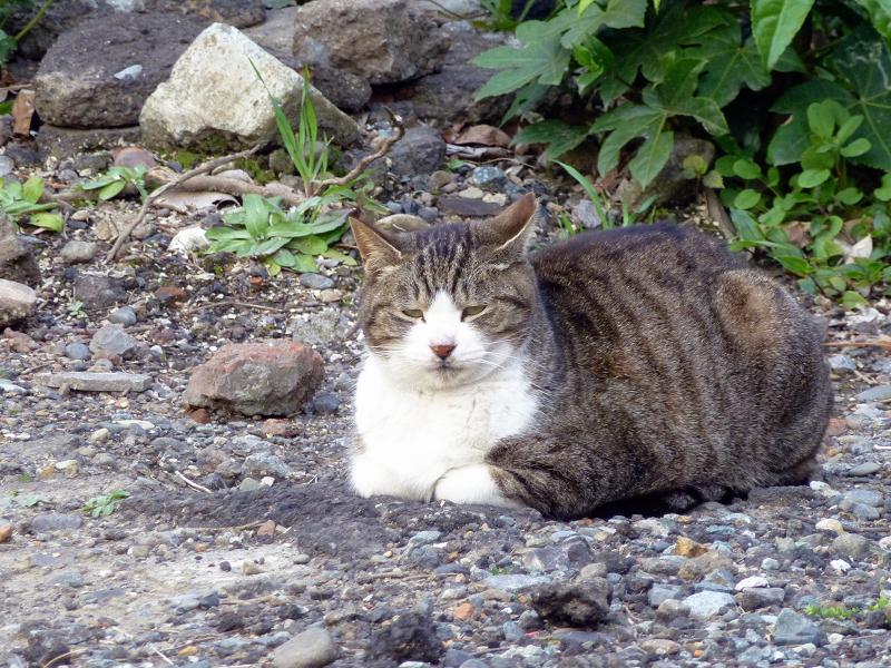 住宅街の空き地の猫たち2