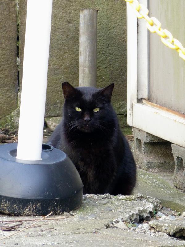 住宅街の空き地の猫たち3