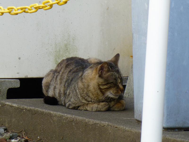 住宅街の空き地の猫たち4