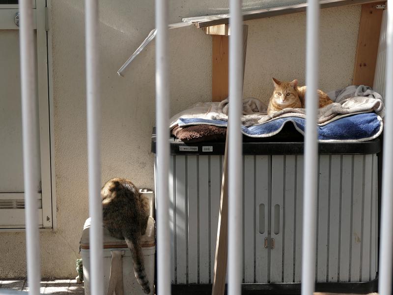 民家敷地の2匹の猫たち1