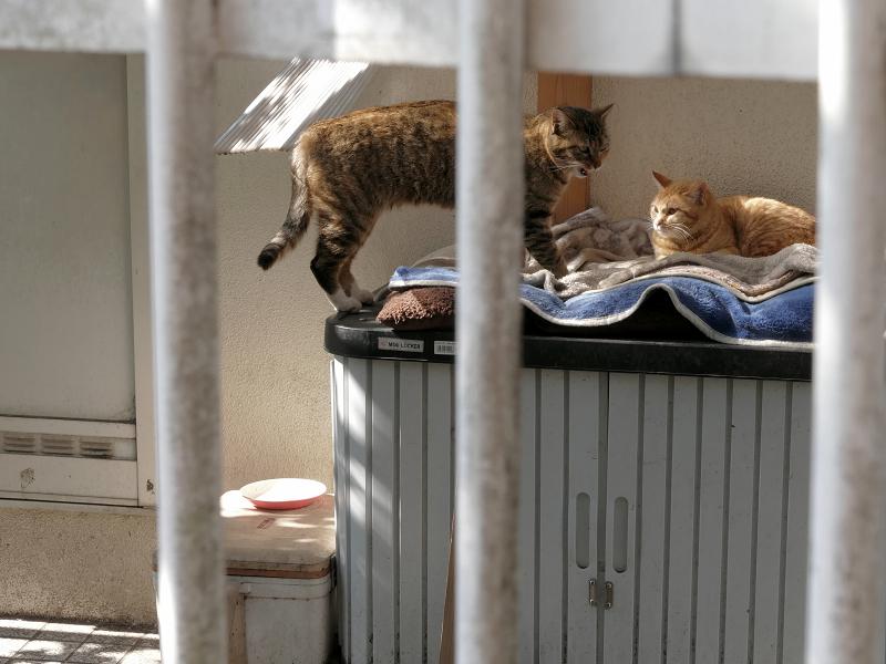 民家敷地の2匹の猫たち2