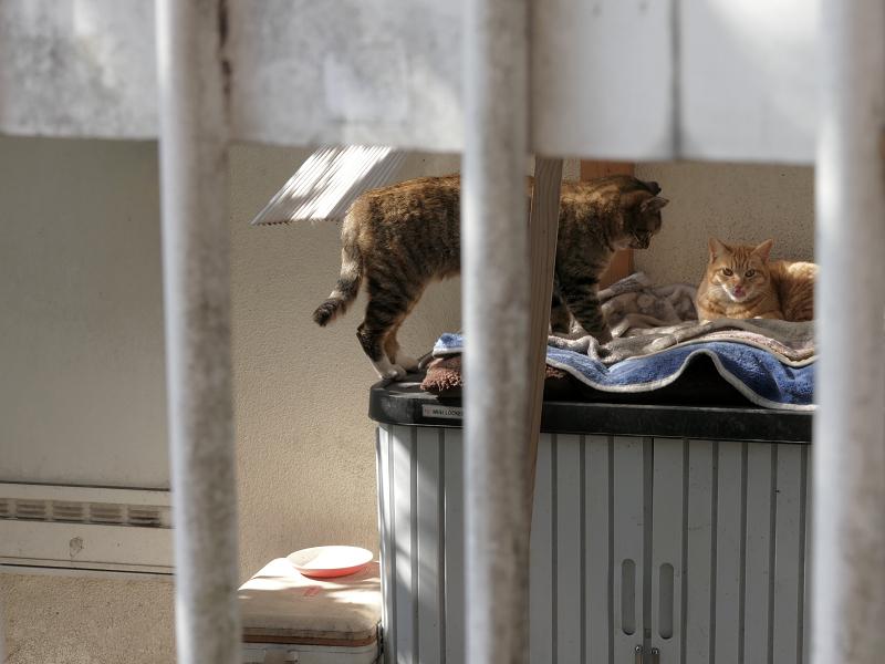 民家敷地の2匹の猫たち3
