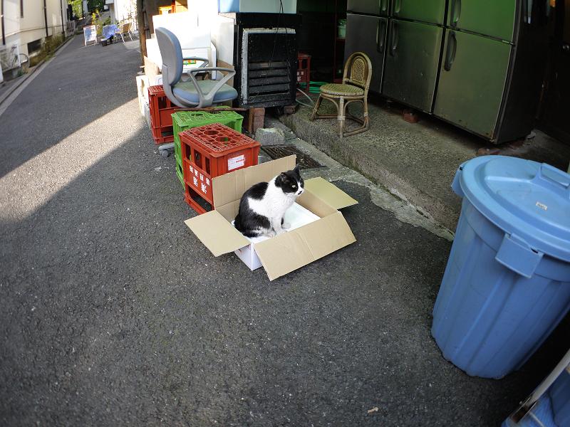 裏路地箱に乗った黒白猫1