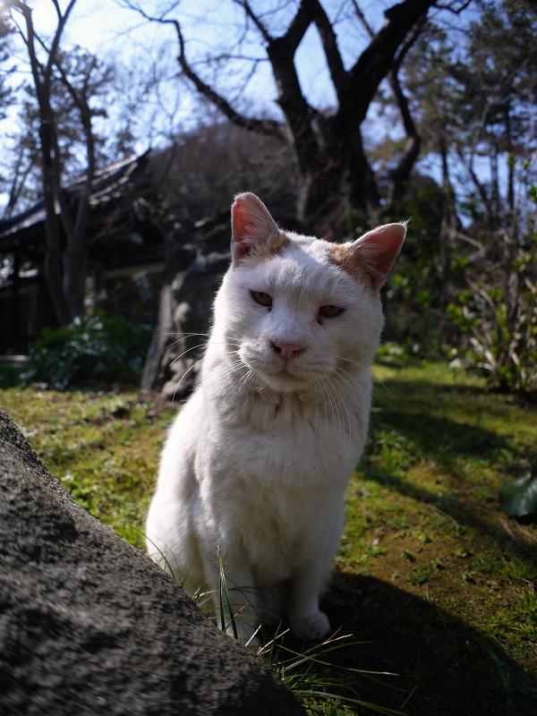 眼の前の白茶猫1