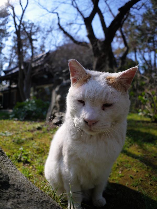 眼の前の白茶猫2