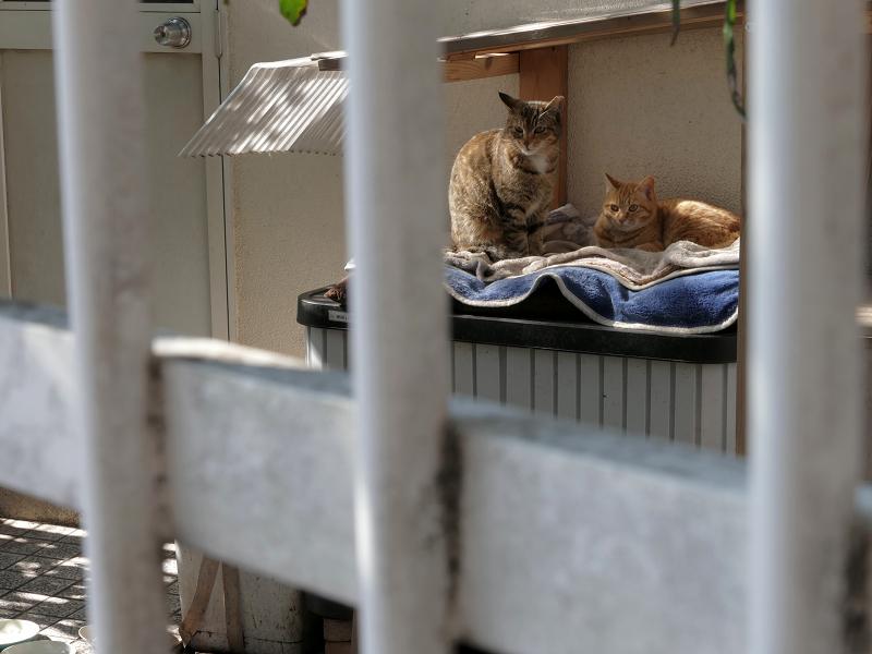 物置の上の猫たち2
