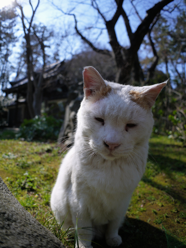 眼の前の白茶猫3
