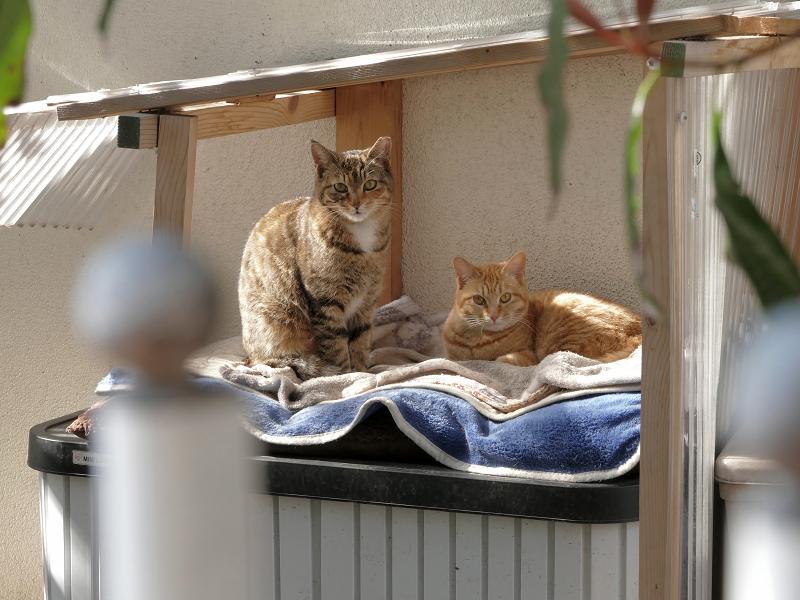 物置の上の猫たち3