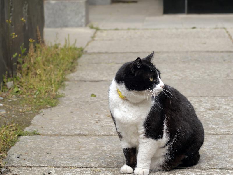 石参道の黒白猫3
