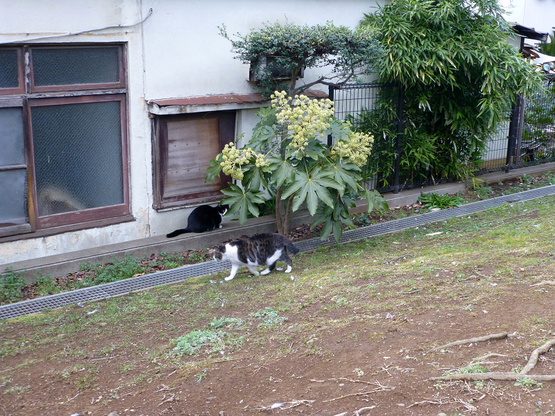 公園の端っこの猫たち1