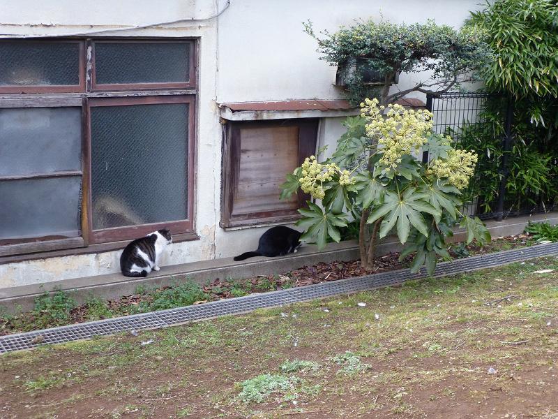 公園の端っこの猫たち2