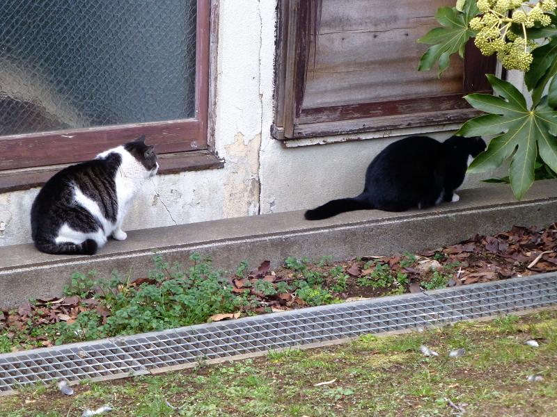 公園の端っこの猫たち3