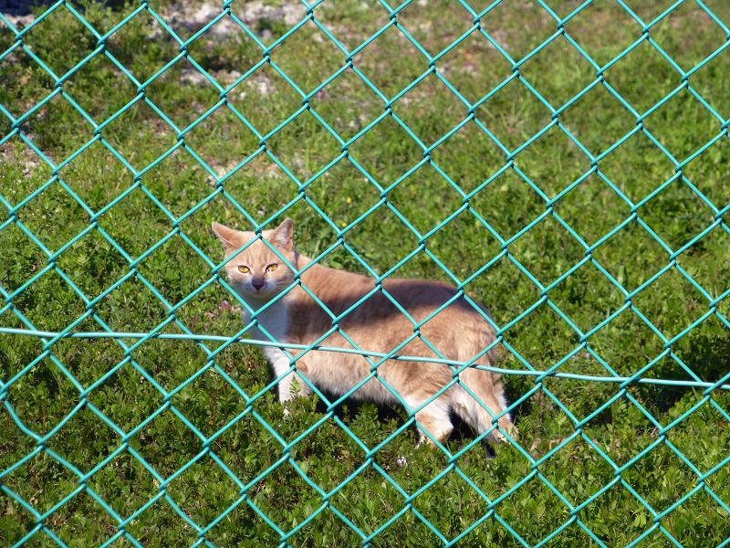 過網越しの猫