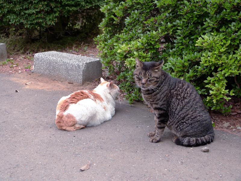 植え込み横の猫2匹1
