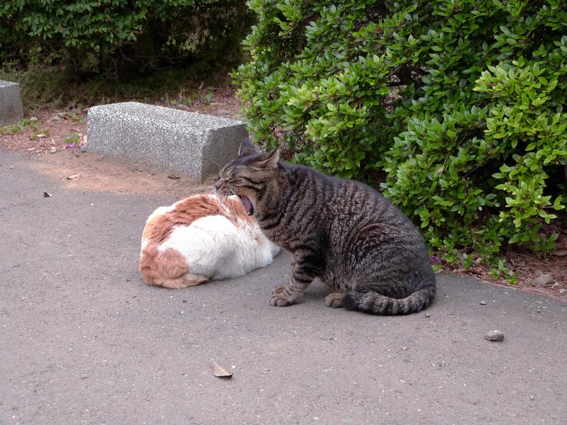 植え込み横の猫2匹2