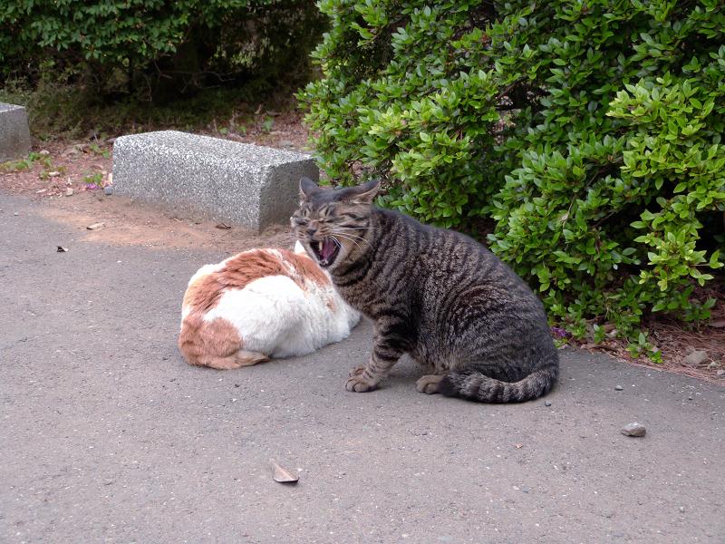 植え込み横の猫2匹3