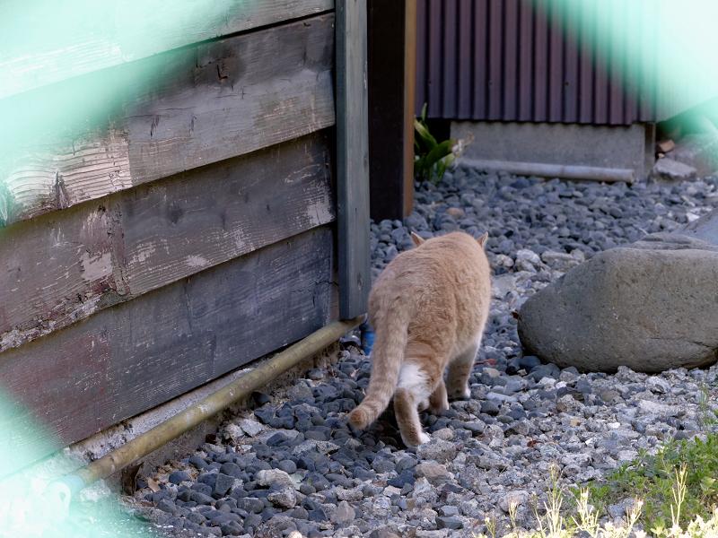 民家の裏に入る猫2