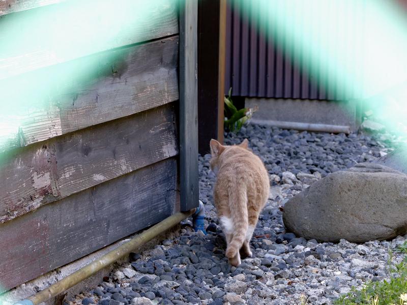 民家の裏に入る猫3