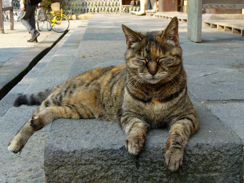 礎石で寝ているサビ柄猫1