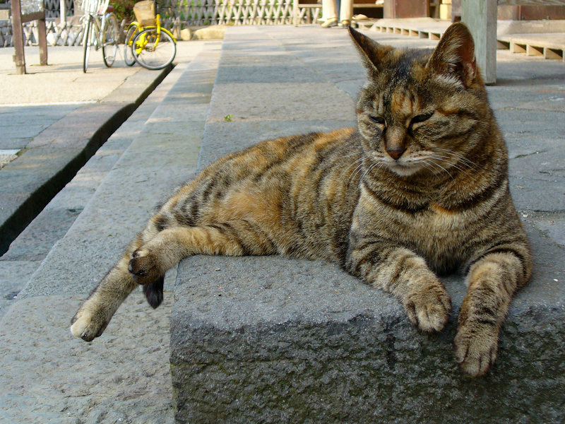 礎石で寝ているサビ柄猫2
