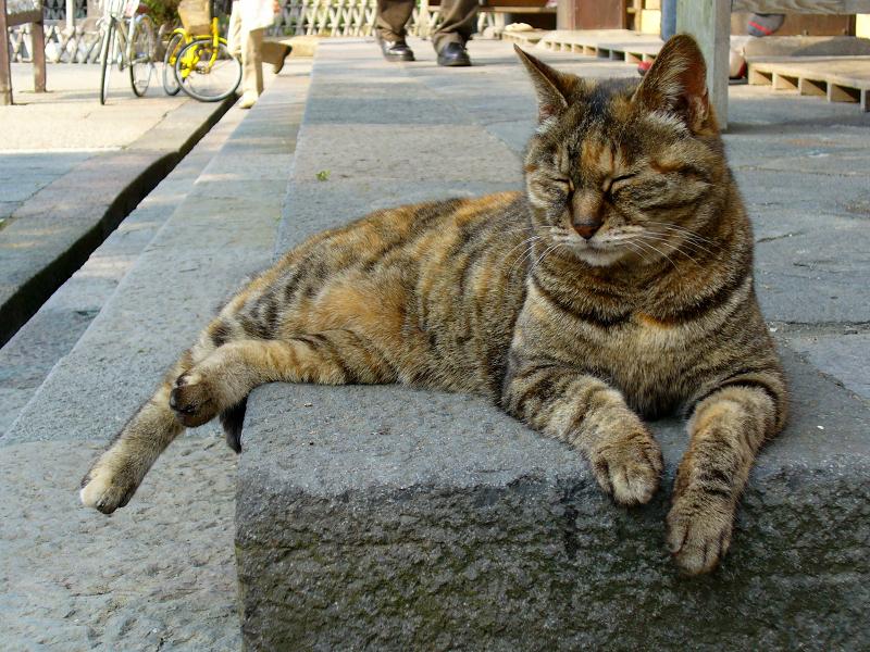礎石で寝ているサビ柄猫3