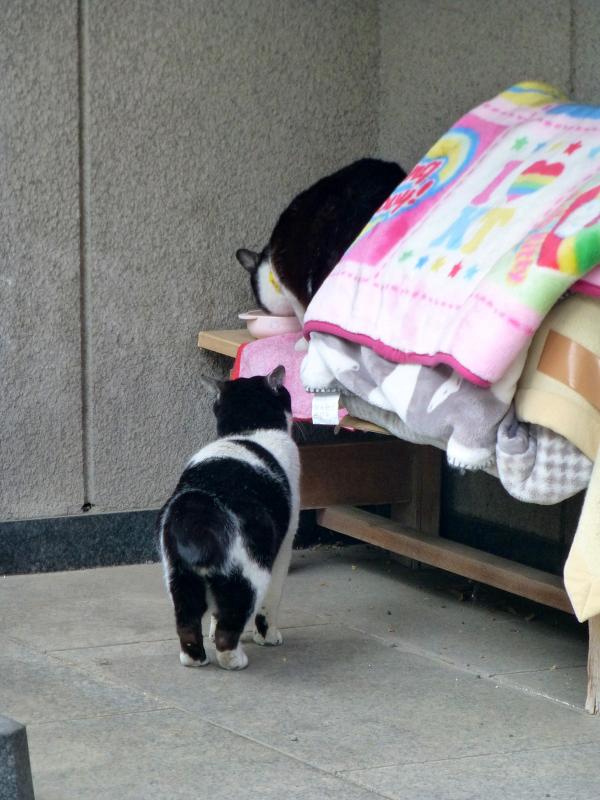 義理姉妹猫1