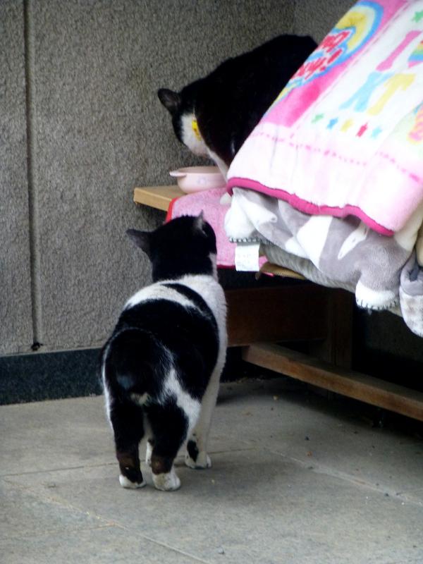義理姉妹猫2