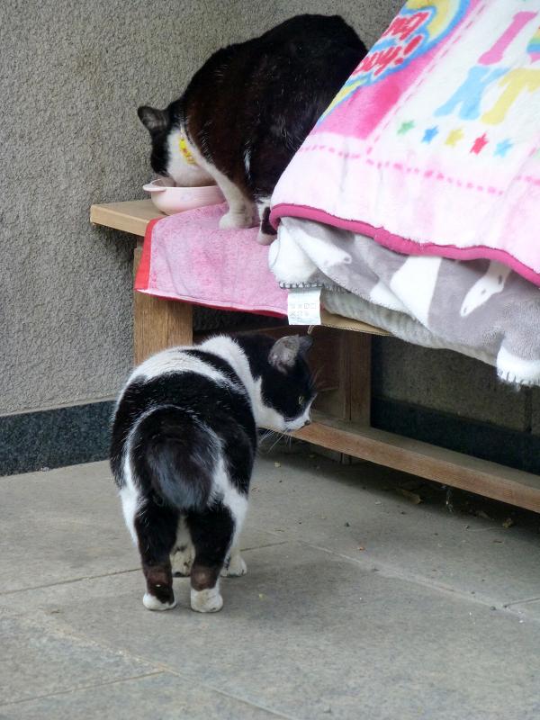 義理姉妹猫3