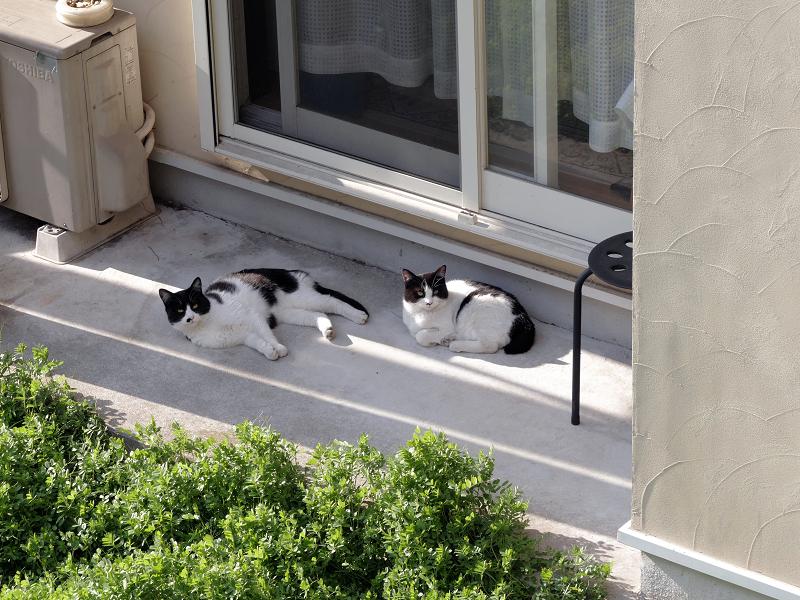 崖下民家の猫たち1