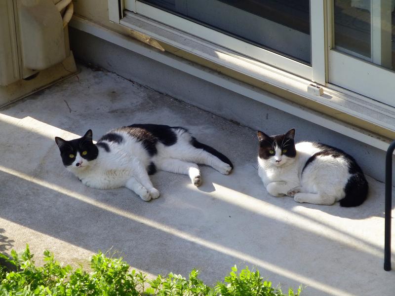 崖下民家の猫たち2