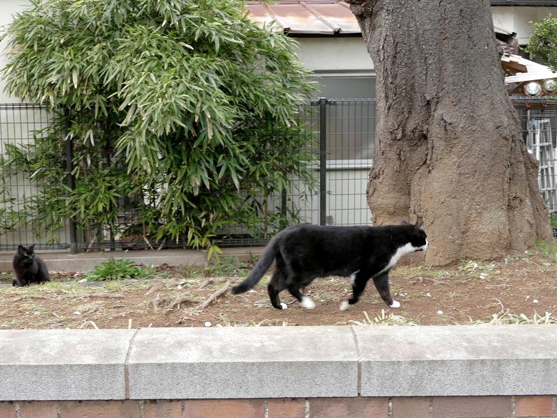 公園の端の猫たちの緊張感3