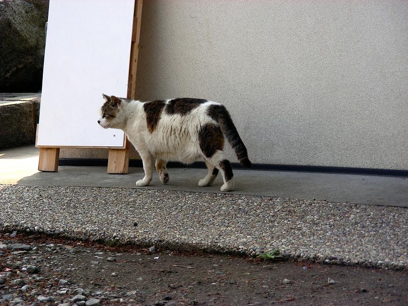 看板前の白キジ猫2