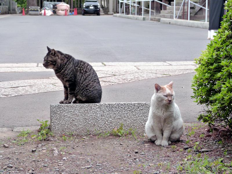 仲良しになった猫2匹1
