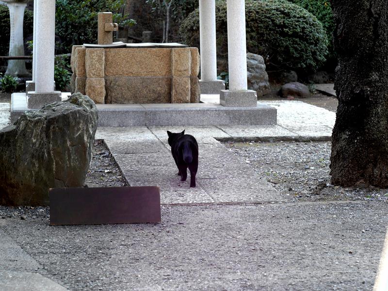 井戸へ歩く黒猫