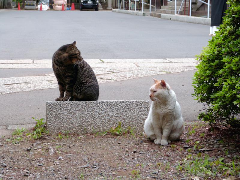 仲良しになった猫2匹2