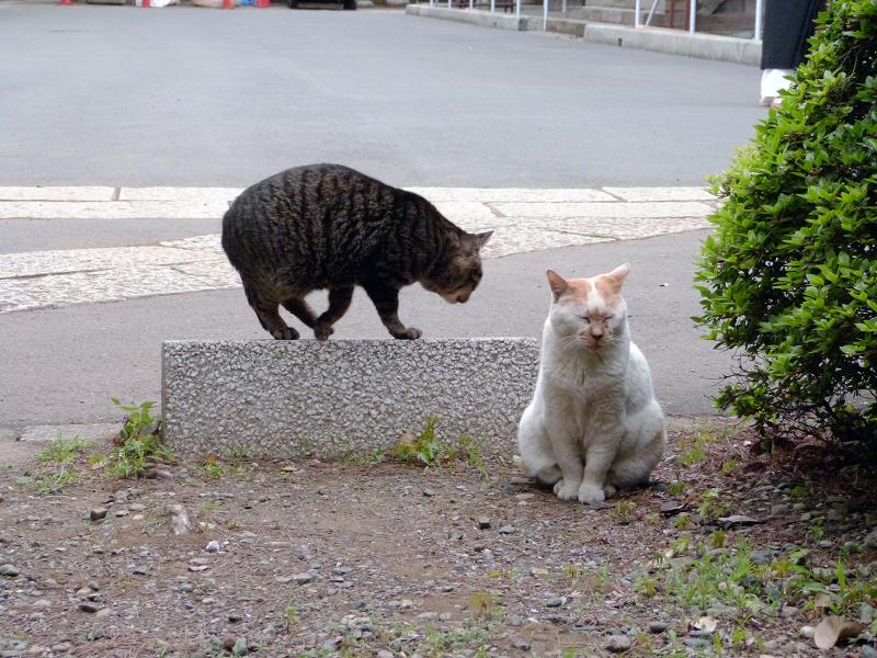 仲良しになった猫2匹3