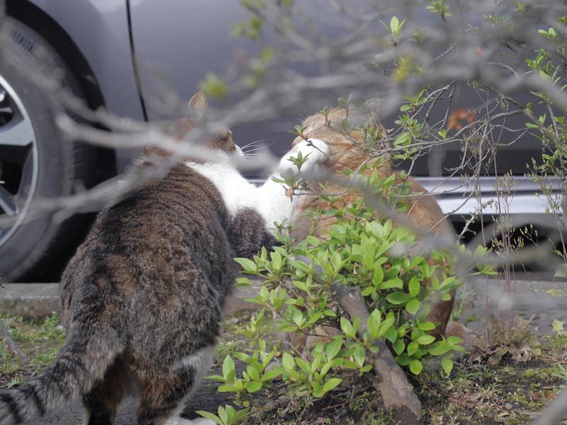 茂みの向こうの仲良し2匹3