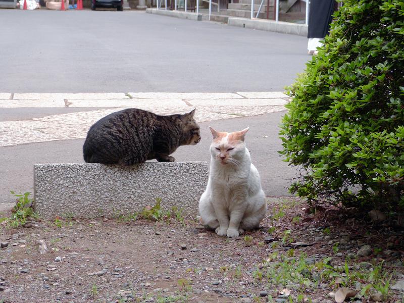 仲良しになった猫2匹4