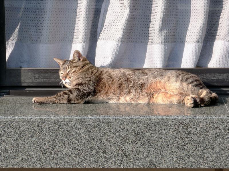 社務所のキジトラ猫2