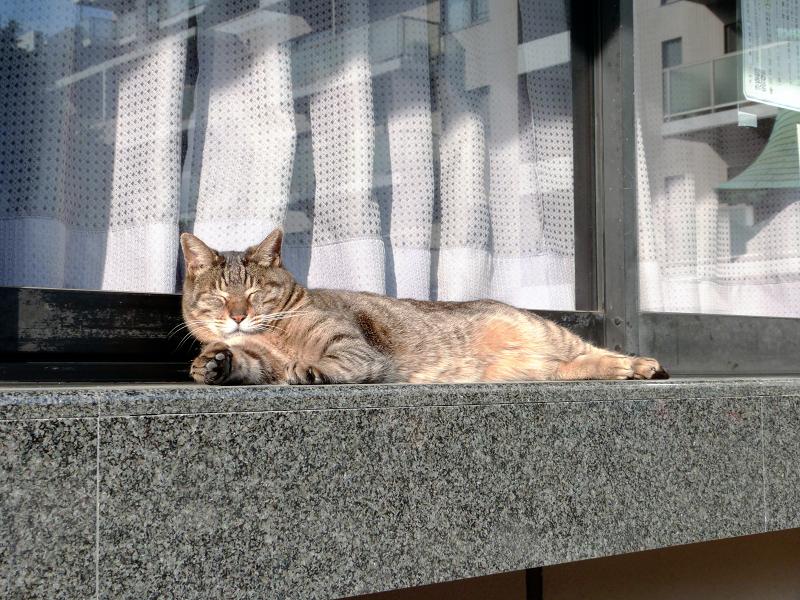 社務所のキジトラ猫3