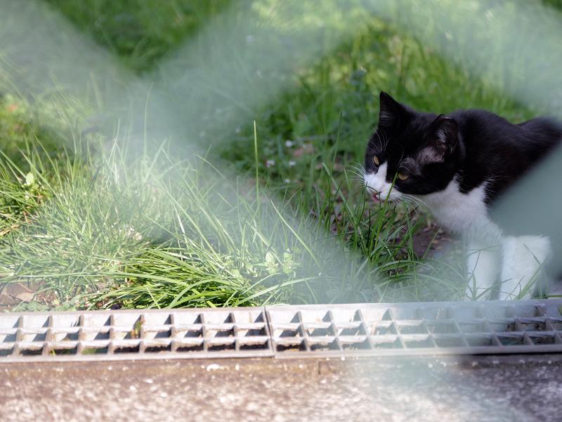 金網の向こうの黒白猫2