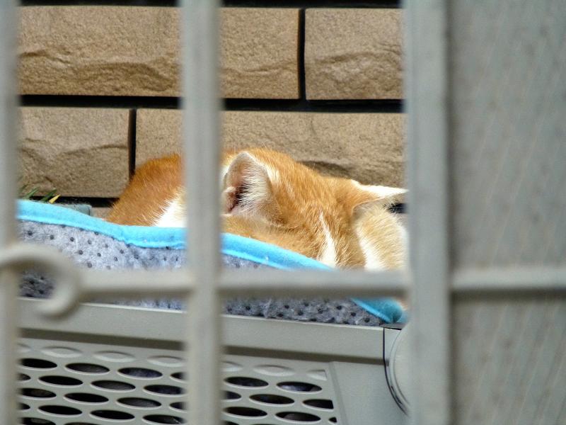 スクターの籠の茶白猫3