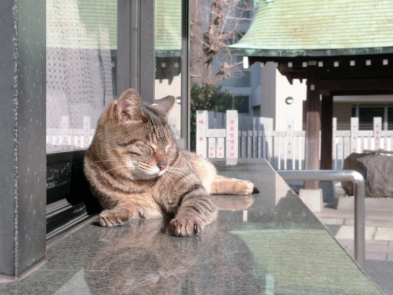 社務所御影石のキジトラ猫1