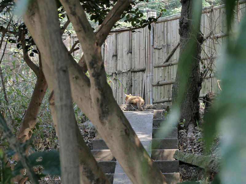 茂み階段の猫1