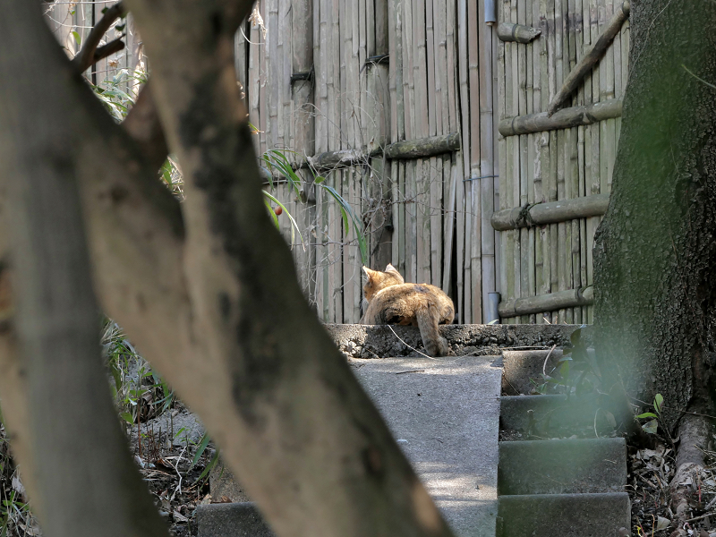 茂み階段の猫2